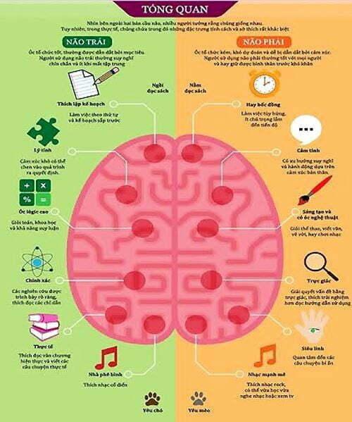 Bảng so sánh chức năng của hai bán cầu não.