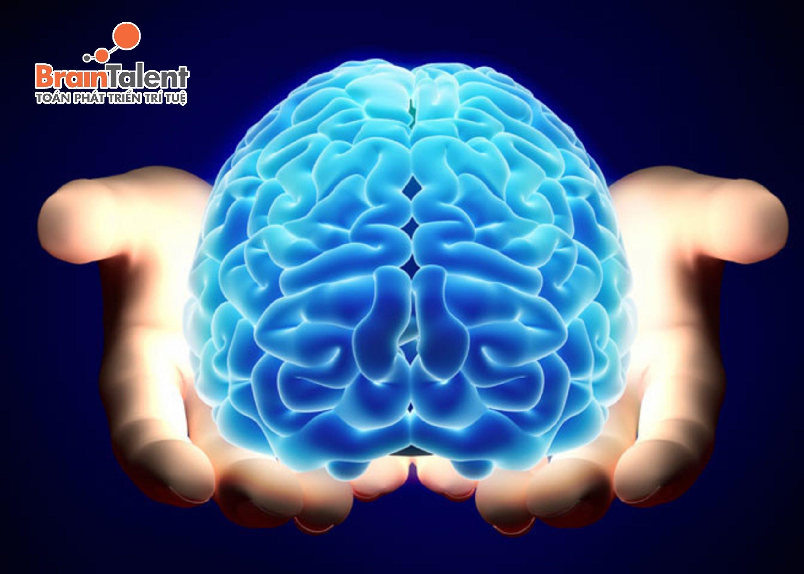 Mỗi bên bán cầu não đều có chức năng riêng, song chúng luôn hỗ trợ lẫn nhau trong quá trình hoạt động.